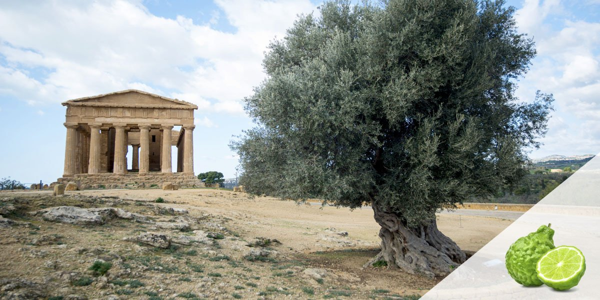 Come gustiamo il bergamotto e le sue coltivazioni in Sicilia nella Valle Templi tra ipogei e paradisi terrestri